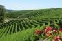 Biozon utilizzo dell'ozono in agricoltura - Gorle