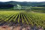 Biozon utilizzo dell'ozono in agricoltura - Gorle Bg